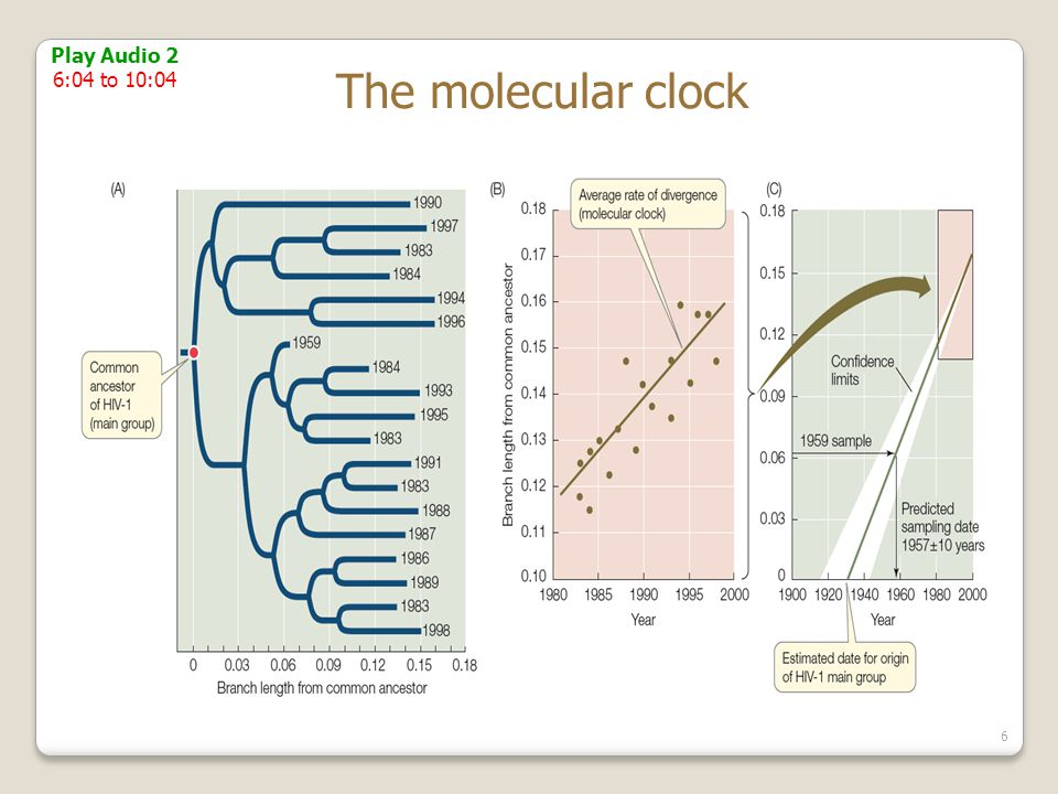 Relaxed molecular clock dating