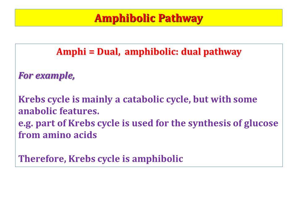 anabolic endergonic or exergonic