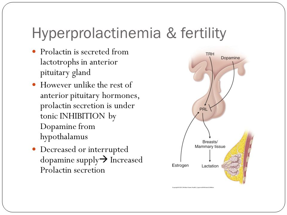Hyperprolactinemia & fertility