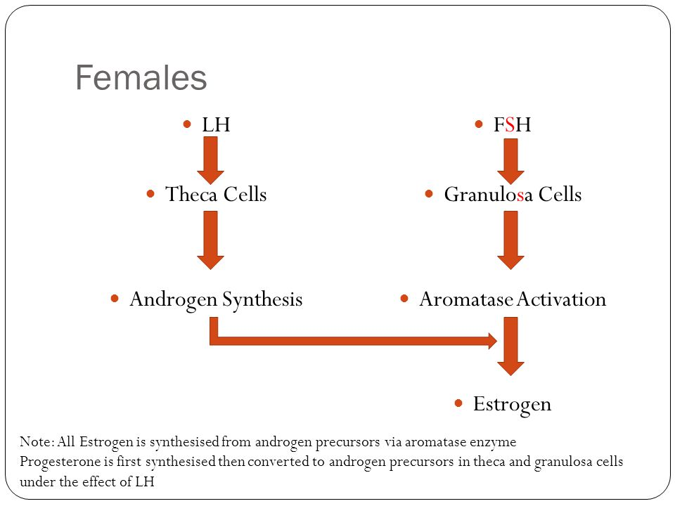 Females LH Theca Cells Androgen Synthesis FSH Granulosa Cells