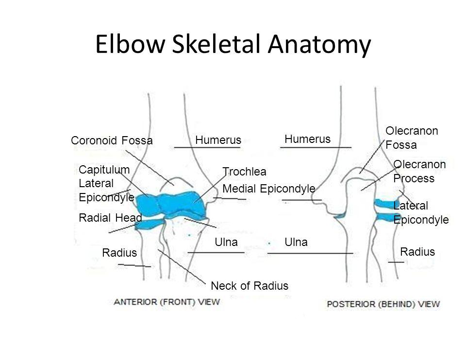 Neck skeletal anatomy