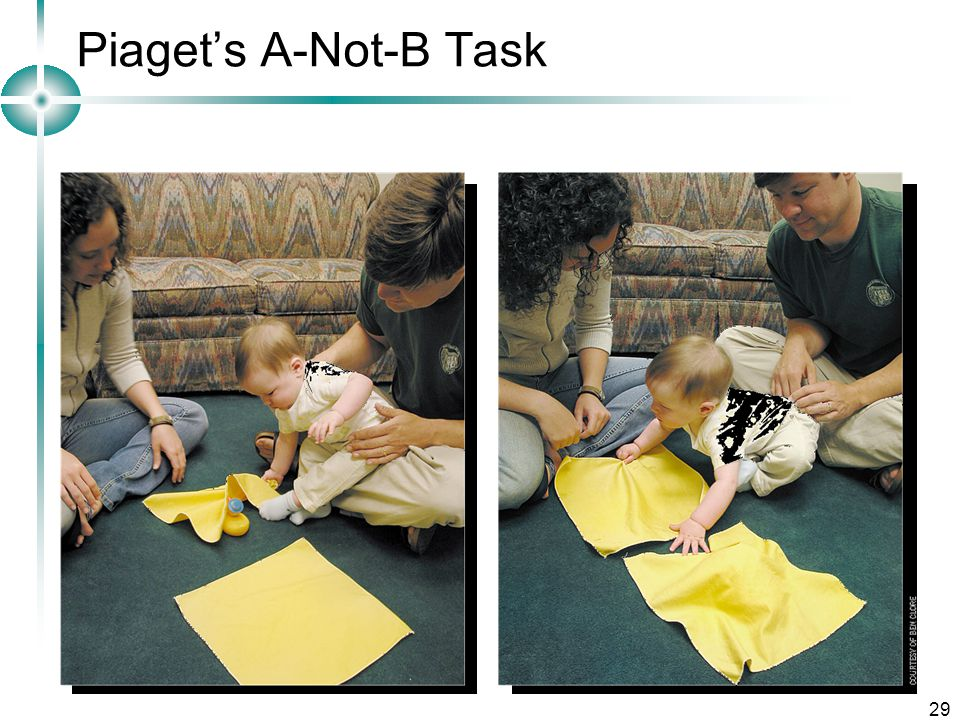 Piaget's A-Not-B Task Developmental Psychology Lecture 3