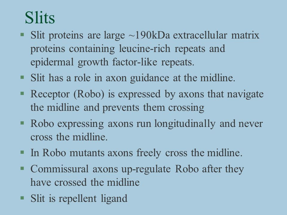 SlitsSlit proteins are large ~190kDa extracellular matrix proteins containing leucine-rich repeats and epidermal growth factor-like repeats.