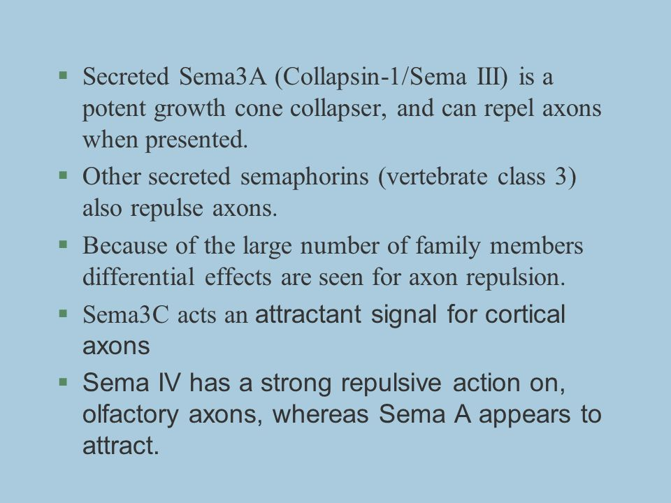 Secreted Sema3A (Collapsin-1/Sema III) is a potent growth cone collapser, and can repel axons when presented.
