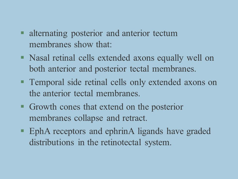 alternating posterior and anterior tectum membranes show that: