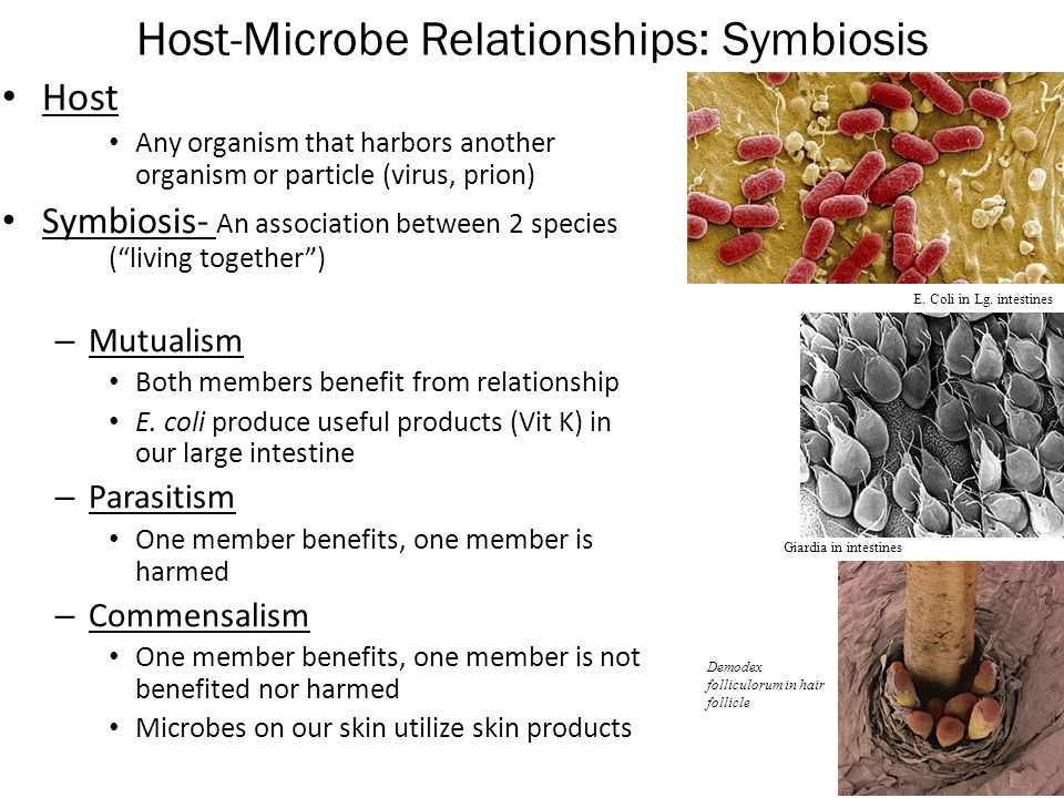 host symbiont relationship