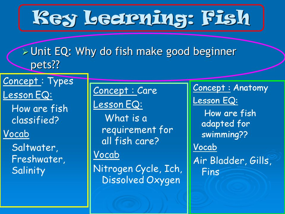 Fish animal science level ppt video online download for Good beginner fish