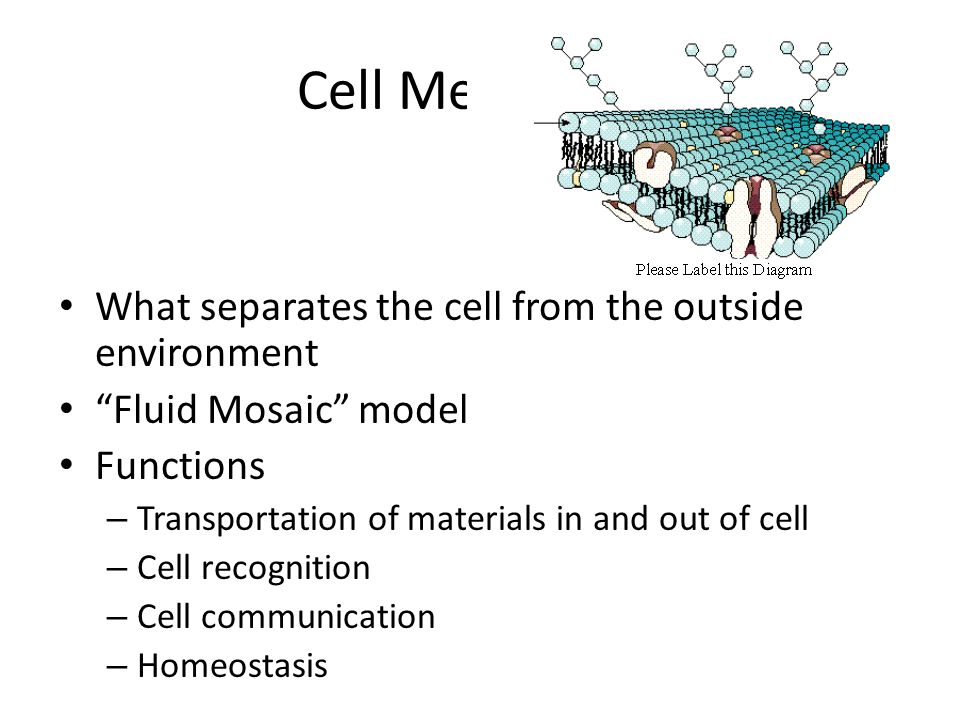 Cell (biology)
