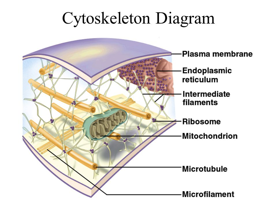 Chapter 3 Cellular Form And Function Ppt Video Online