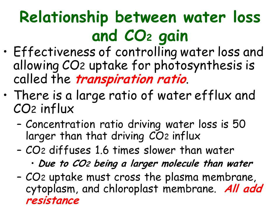 relationship between osmosis and transpiration