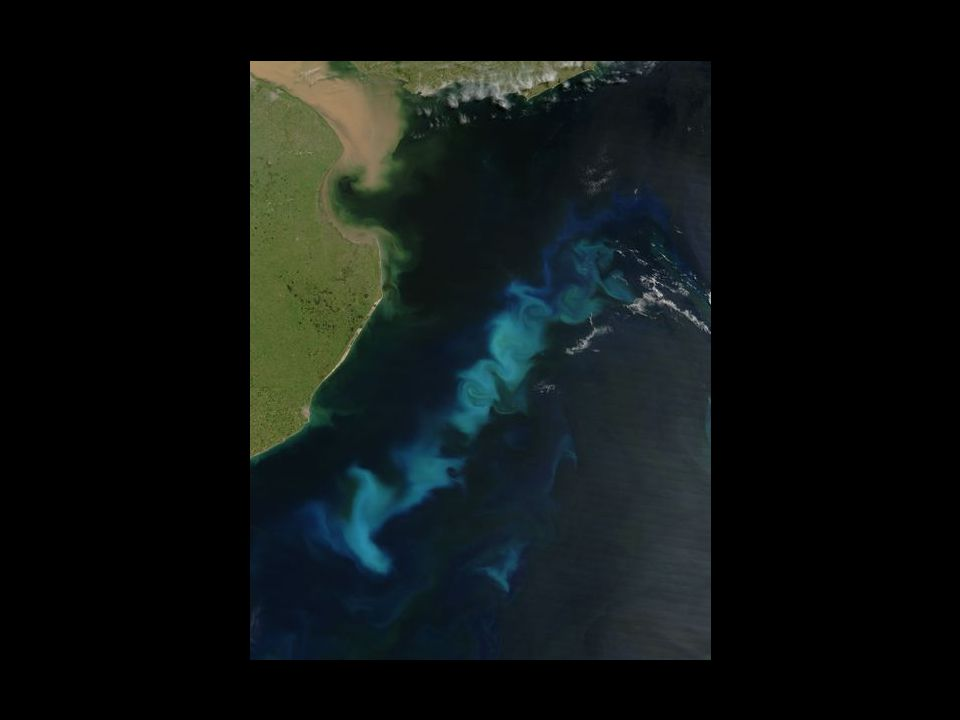 To see phytoplankton in the coean, one needs to view the ocean from space.