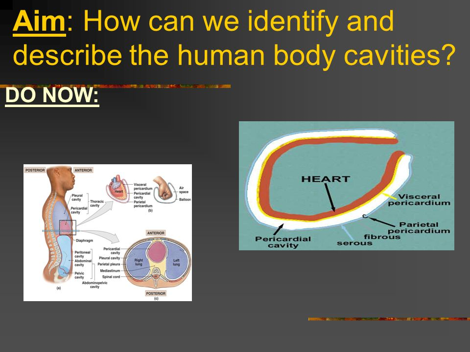 Aim: How can we identify and describe the human body cavities