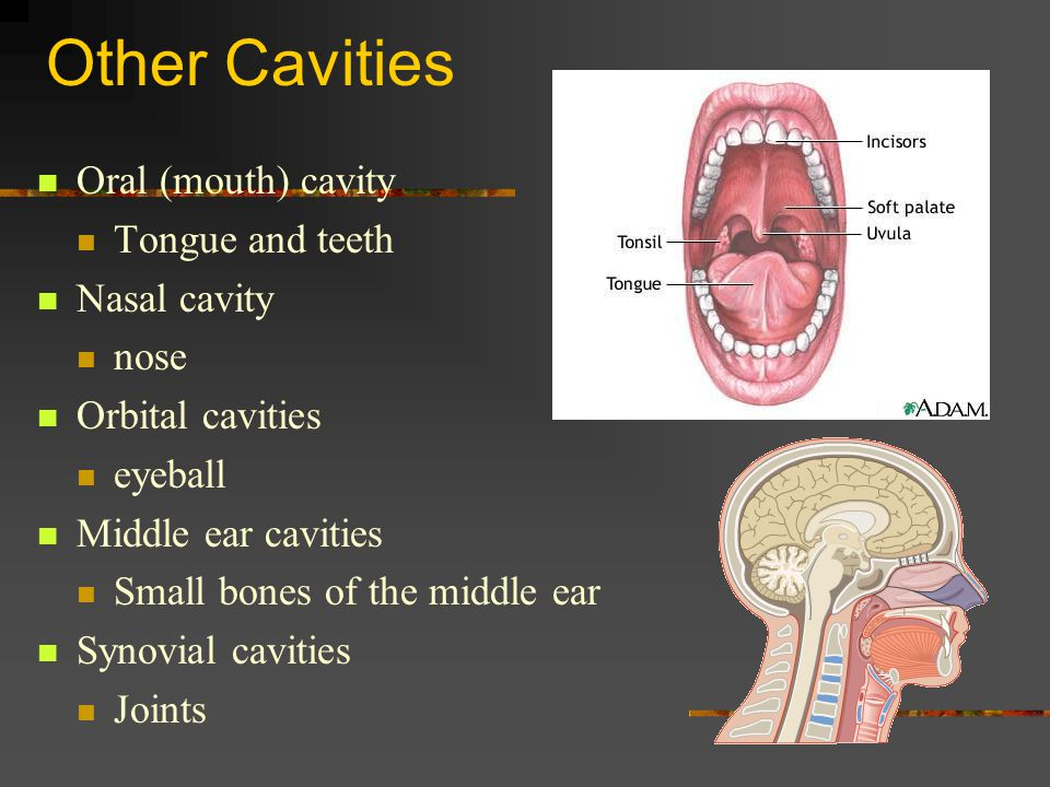 Other Cavities Oral (mouth) cavity Tongue and teeth Nasal cavity nose