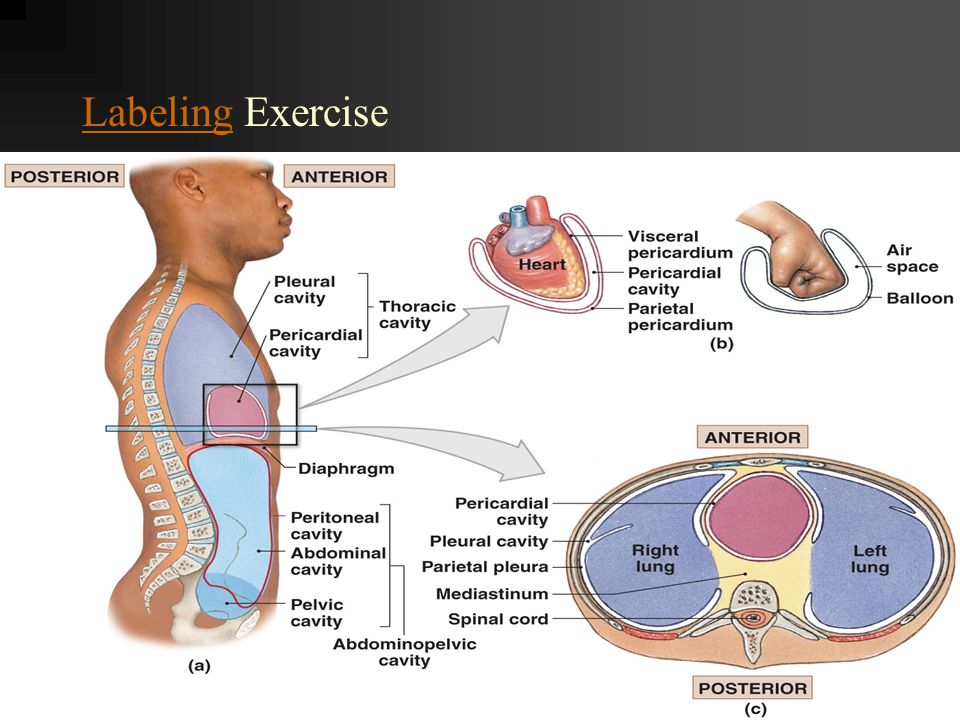 Labeling Exercise