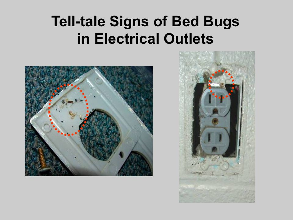Bed Bug Detection And Management In Schools Dr Ppt Video