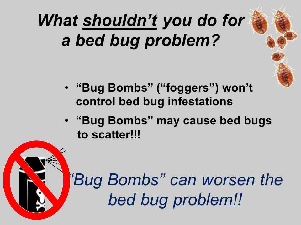 Where Can I Buy Bed Bug Bombs