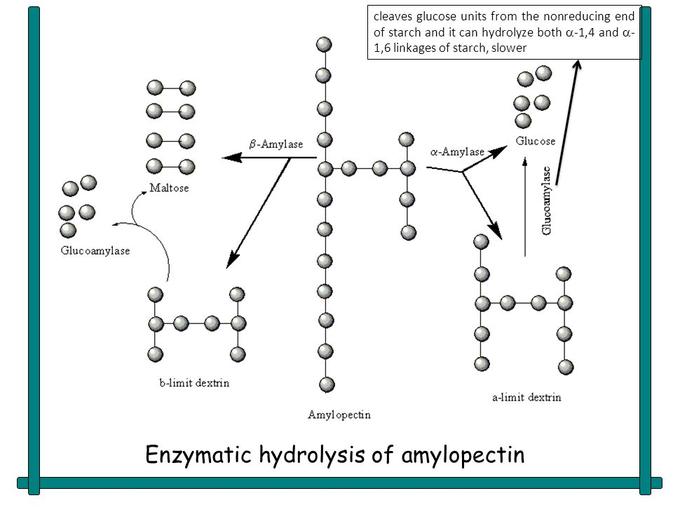 enzymatic hydrolysis of starch