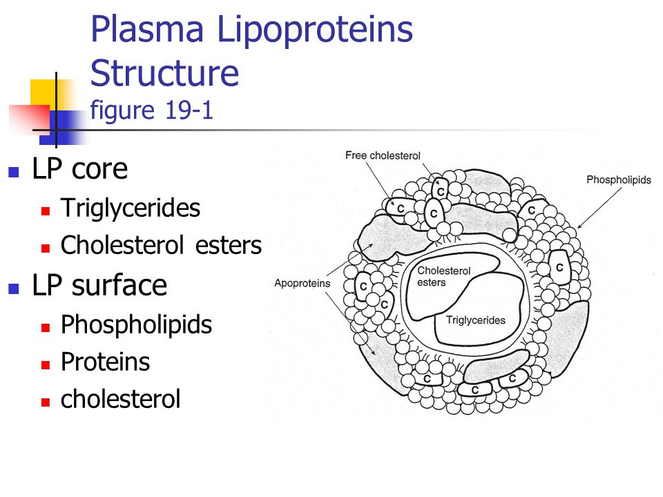relationship of cholesterol and lipoproteins structure