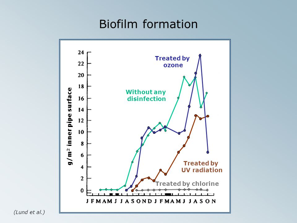 Biofilm formation Treated by ozone Without any disinfection