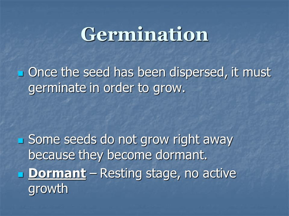 Germination Once the seed has been dispersed, it must germinate in order to grow. Some seeds do not grow right away because they become dormant.