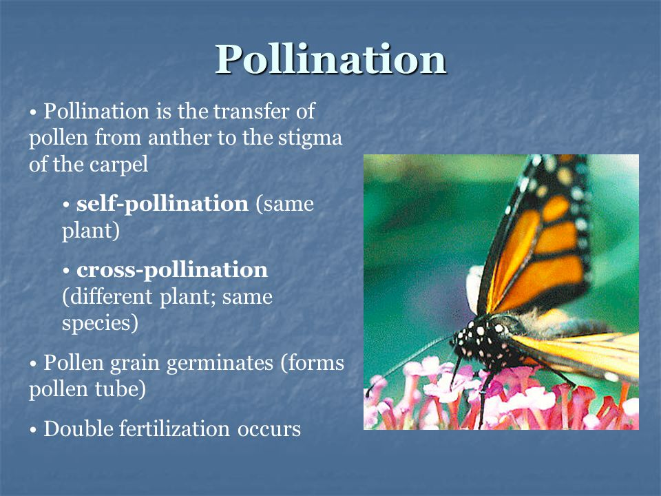 Pollination Pollination is the transfer of pollen from anther to the stigma of the carpel. self-pollination (same plant)