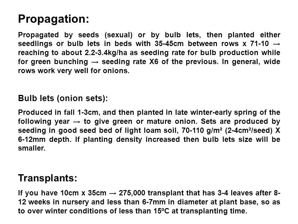 Propagation: Transplants: Bulb lets (onion sets):