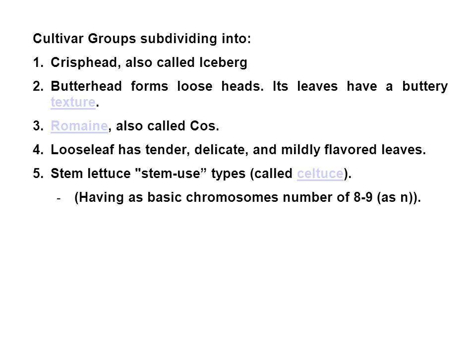 Cultivar Groups subdividing into:
