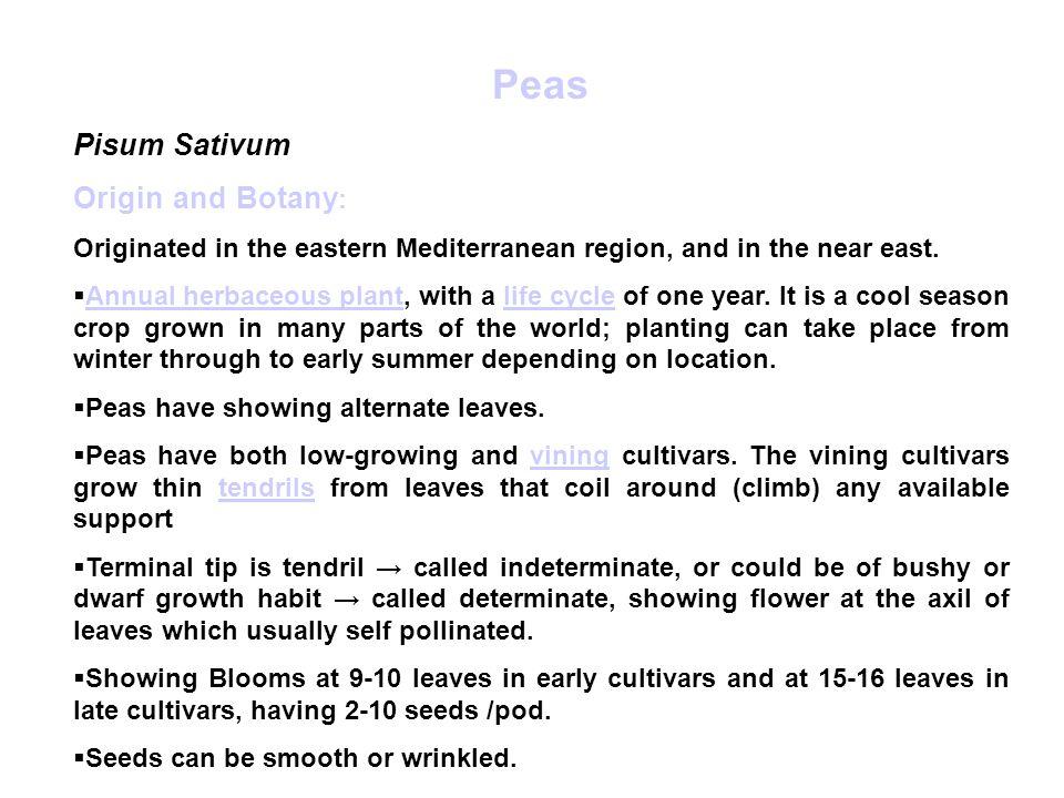 Peas Pisum Sativum Origin and Botany: