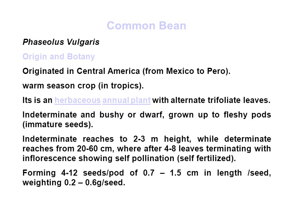 Common Bean Phaseolus Vulgaris Origin and Botany