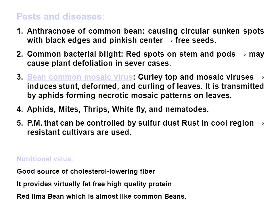 Pests and diseases: Anthracnose of common bean: causing circular sunken spots with black edges and pinkish center → free seeds.
