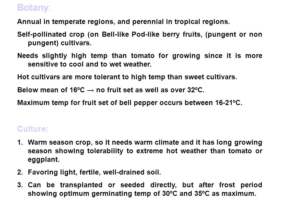 Botany: Annual in temperate regions, and perennial in tropical regions.
