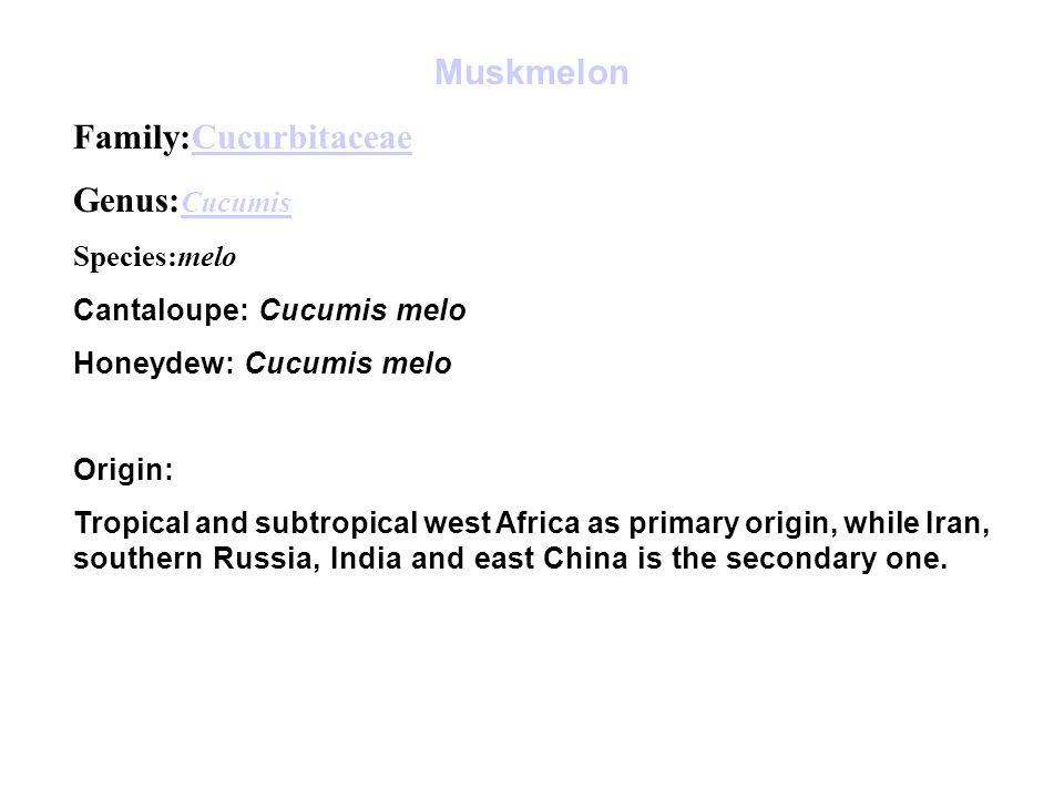 Family:Cucurbitaceae Genus:Cucumis