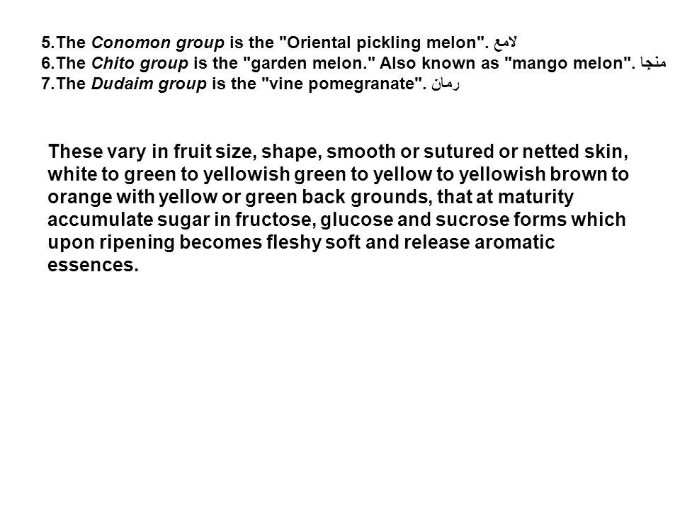 5.The Conomon group is the Oriental pickling melon . لامع