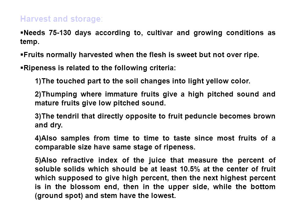 Harvest and storage: Needs 75-130 days according to, cultivar and growing conditions as temp.