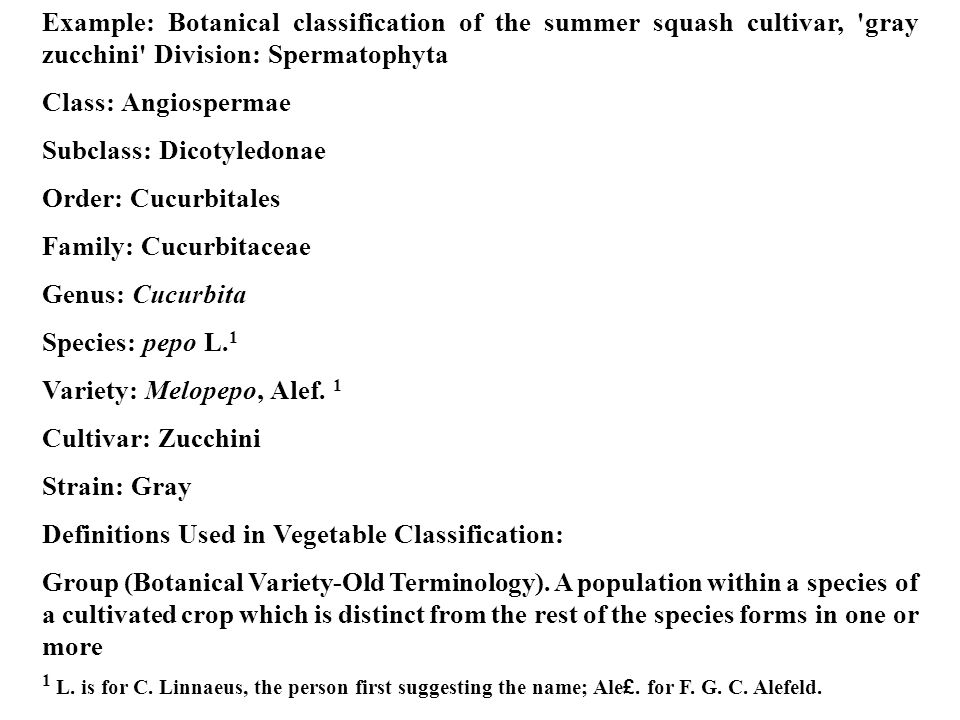 Example: Botanical classification of the summer squash cultivar, gray zucchini Division: Spermatophyta