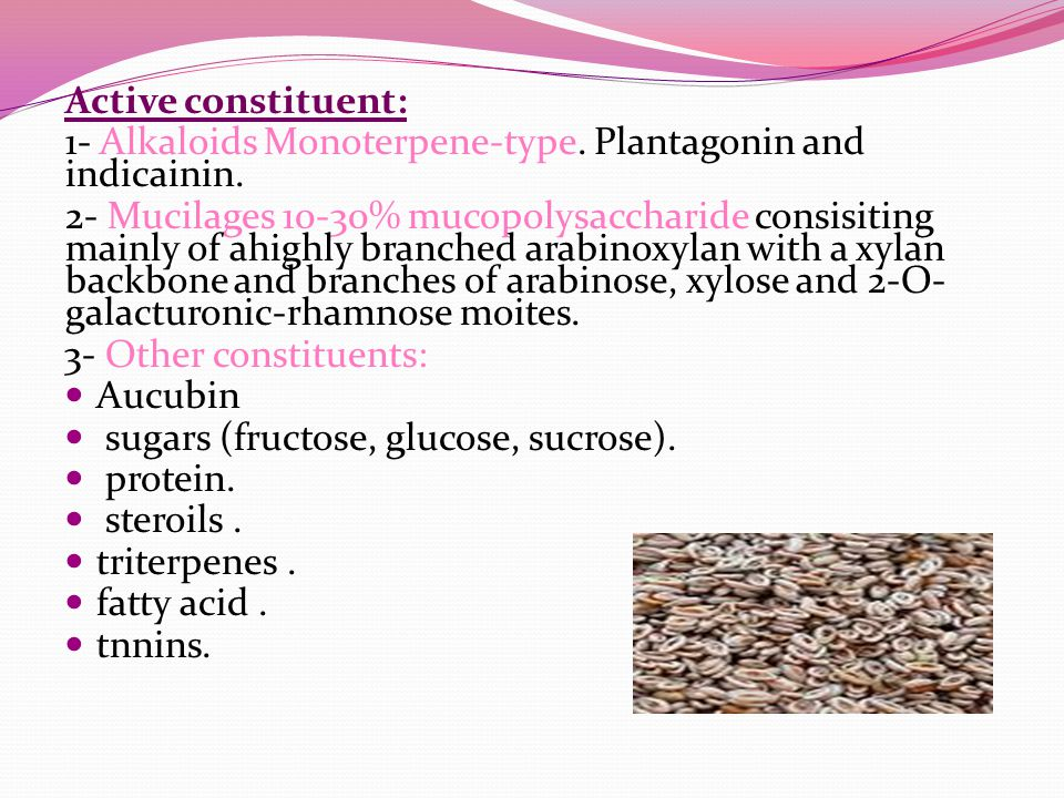 Active constituent: 1- Alkaloids Monoterpene-type. Plantagonin and indicainin.