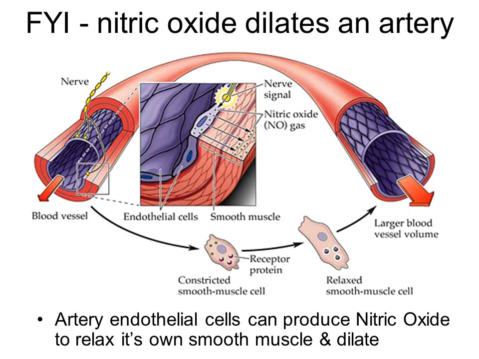 How viagra works nitric oxide