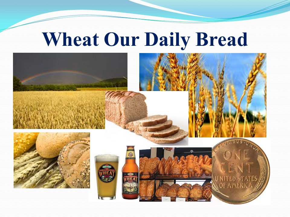 wheat belly william davis pdf download