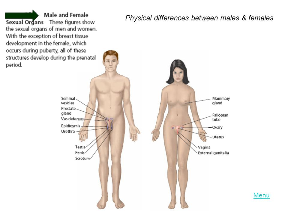 Physical differences between males & females