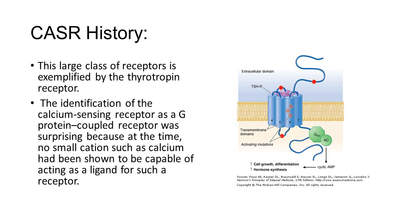 CASR History: This large class of receptors is exemplified by the thyrotropin receptor.