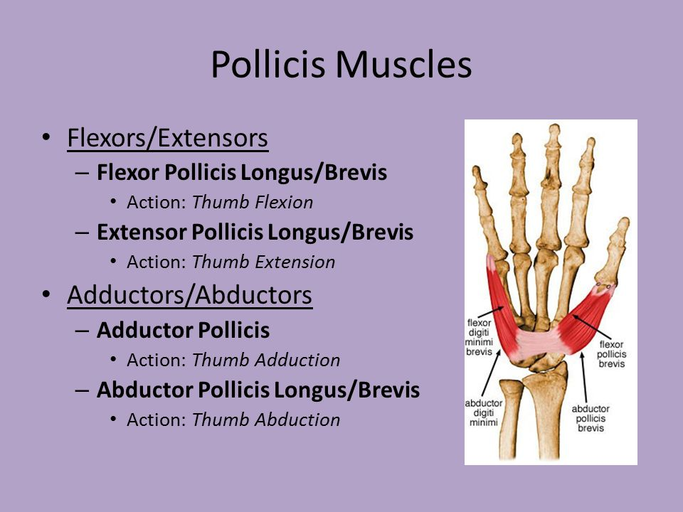 muscles of the hand wrist and forearm ppt video online