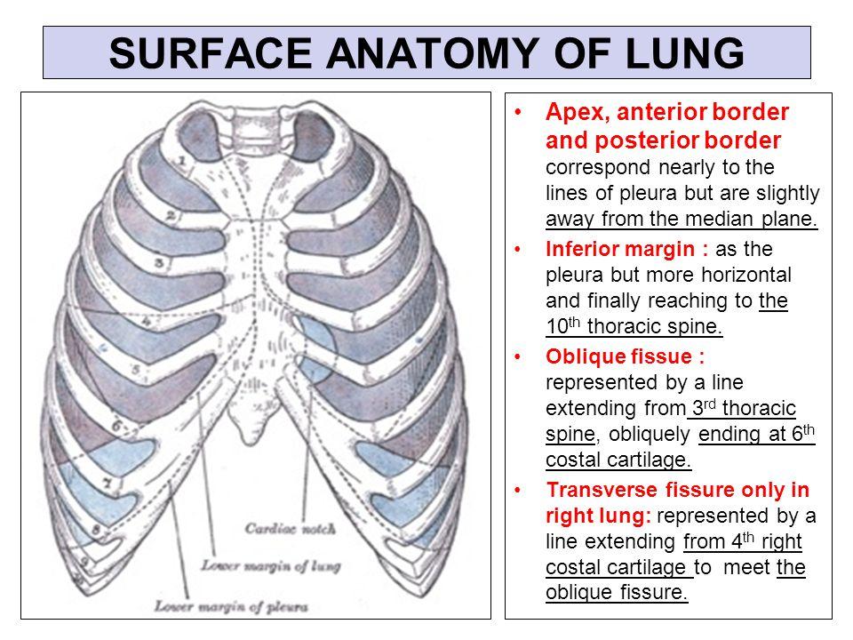 Pleura And Lung By Prof Saeed Abuel Makarem Dr Sanaa Al Sharawi