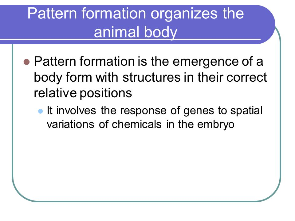 Pattern formation organizes the animal body