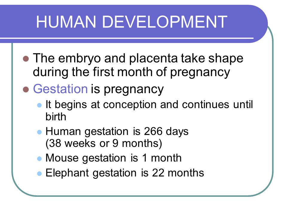 HUMAN DEVELOPMENT The embryo and placenta take shape during the first month of pregnancy. Gestation is pregnancy.