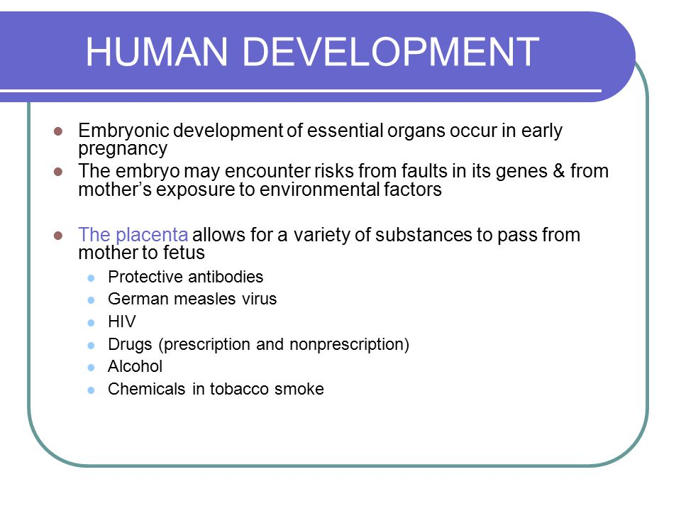 HUMAN DEVELOPMENT Embryonic development of essential organs occur in early pregnancy.