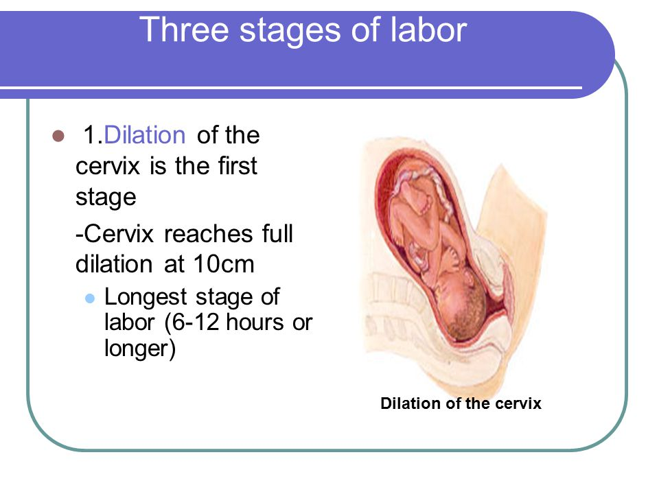 Three stages of labor 1.Dilation of the cervix is the first stage