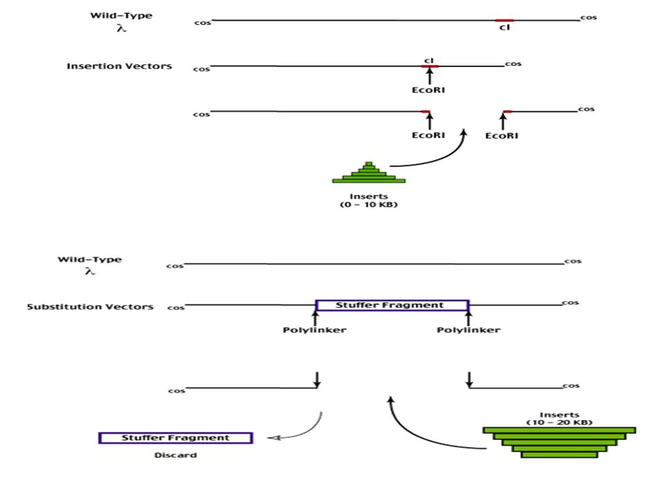an overview analysis of cloning After careful and thorough analysis of the available data, this team identified and described in detail the animal health risks associated with cloning every effort was taken to make this science-based evaluation as objective as possible, and adverse health outcomes are described in the risk assessment with the same or greater level of.