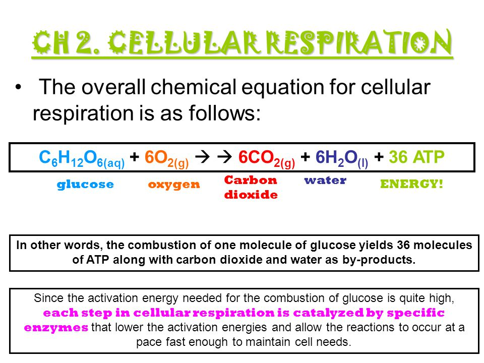CH 2. CELLULAR RESPIRATION - ppt download