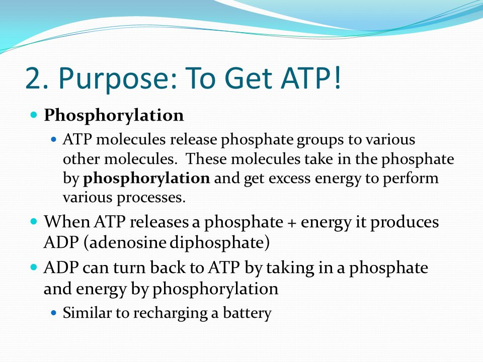 Conversion of glucose to ATP - ppt download