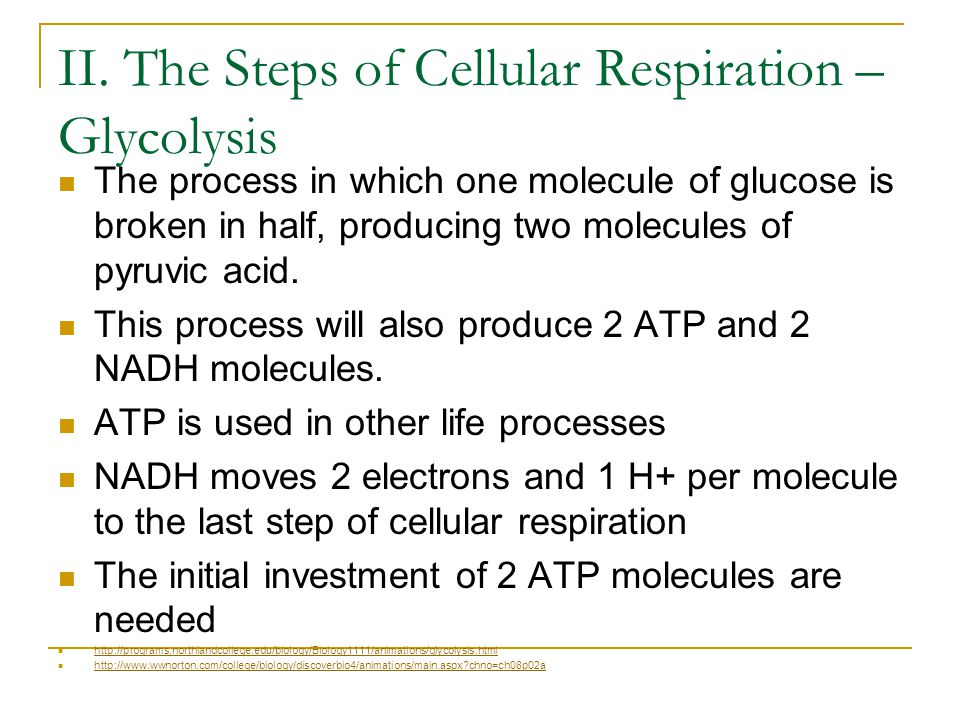 II. The Steps of Cellular Respiration – Glycolysis
